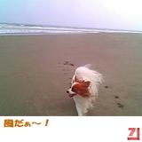 風だぁ〜!