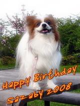 Happy Birthday SAZABY 2008