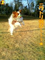 ニワトリ飛び〜〜〜☆