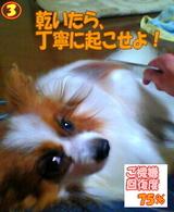 コーミング〜☆