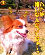 ハトは嫌いなんだってばぁ〜っ!!