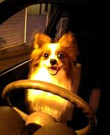 ドライブ大好き〜♪
