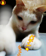 ベッド争奪戦☆6