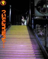 夜の遊具場☆9