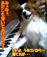 弾いてあげよっか?