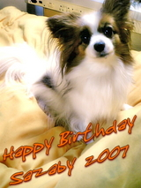 Happy Birthday SAZABY 2007