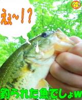 魚かよ!?