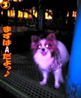 夜の遊具場☆3