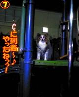夜の遊具場☆7