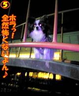夜の遊具場☆5