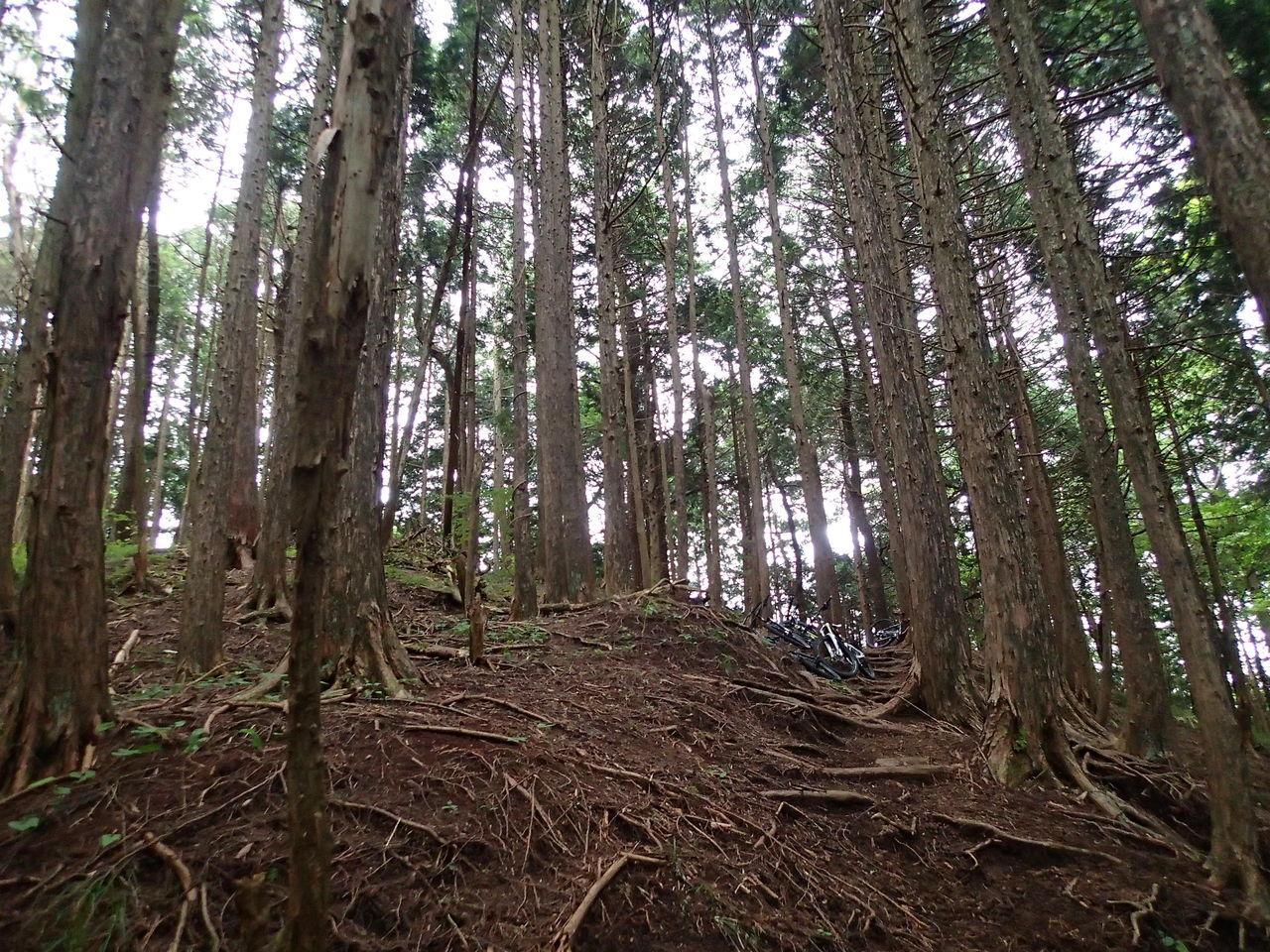 自転車店 平塚 自転車店 : 今回は6月のMTB里山ライドの ...