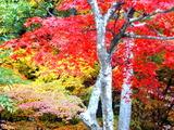 紅葉山の紅葉1