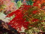 紅葉山の紅葉3