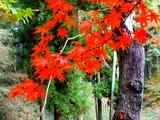 紅葉山の紅葉4