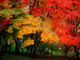 紅葉山の紅葉2