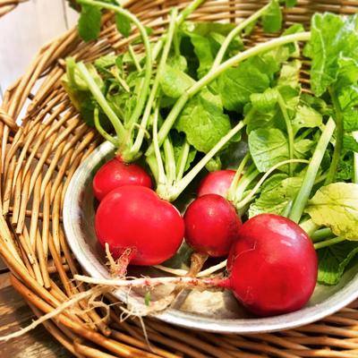 メイドの暮らし ep.8「収穫したお野菜はキッチンに届きました 」