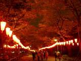上野公園夜桜2
