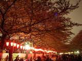 上野公園夜桜1