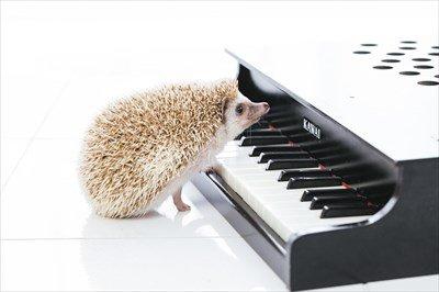 音楽専門学校の生徒「!」 ←講師激怒