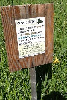 kumachui_s