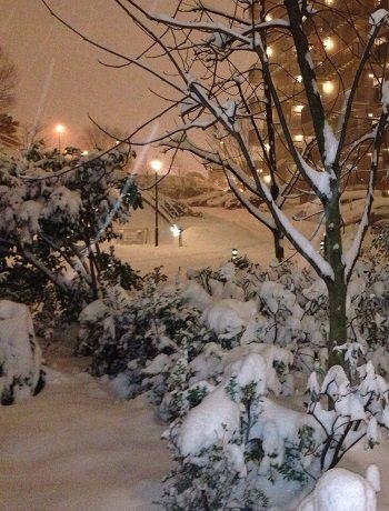 snow20140214