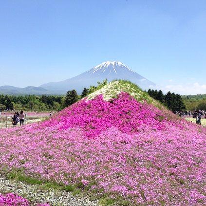 富士芝桜祭_ミニ富士s