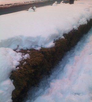 snow299212