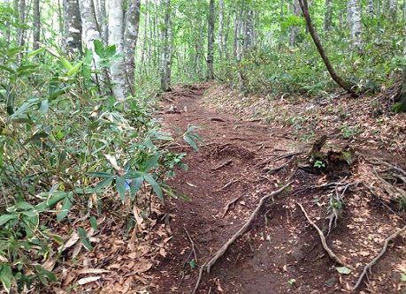 3_trail