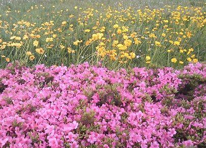 flowers310511