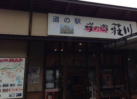 5shokawasakura