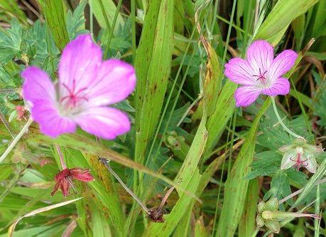 15flower
