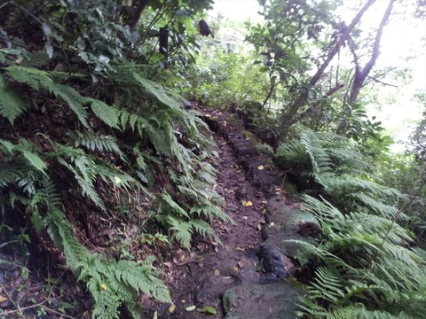 梅雨時の鎌倉アルプスは泥どろ02