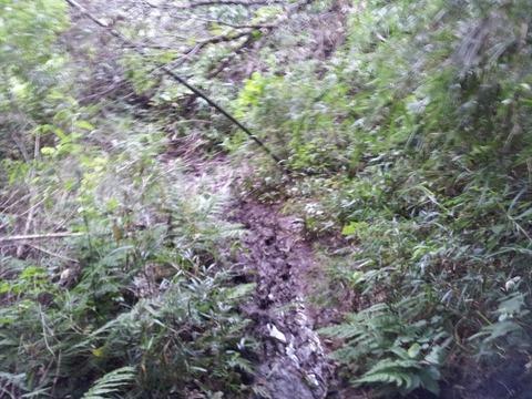 梅雨時の鎌倉アルプスは泥どろ03