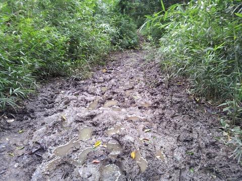 梅雨時の鎌倉アルプスは泥どろ01