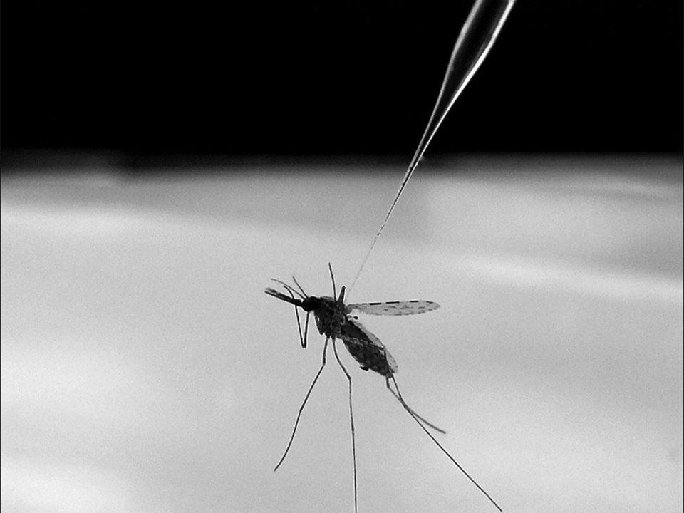sn-malaria