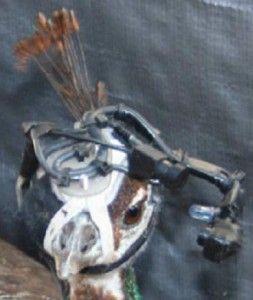 peahen-eye-tracker-253x300