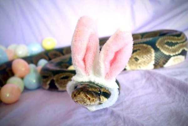 cute-snakes-32