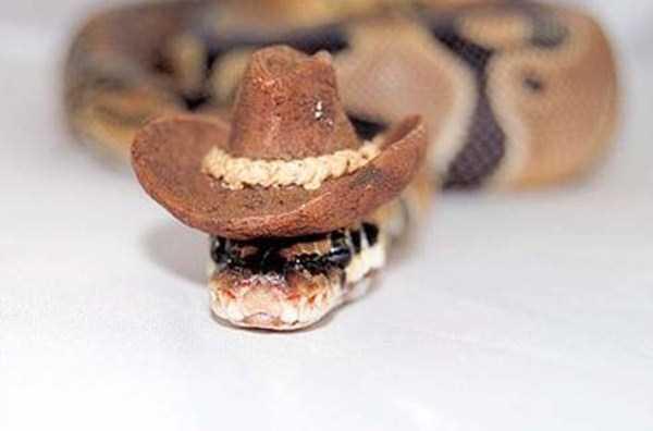 cute-snakes-28