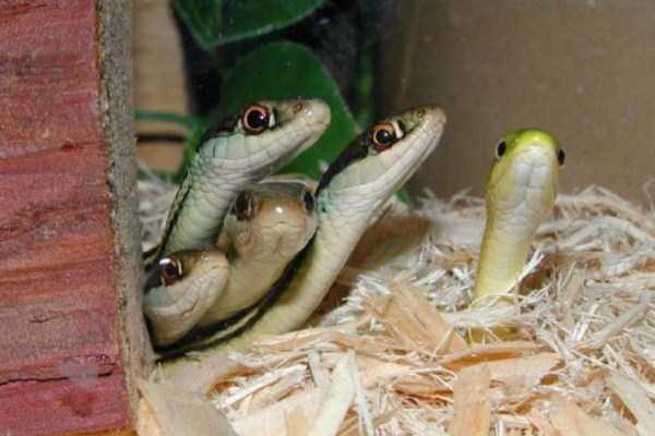 cute-snakes-13