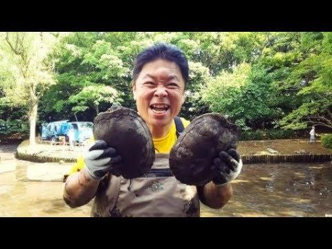 【テレビ】「池の水全部抜く…」から3か月、キレイになった池にカワセミが生息!!!