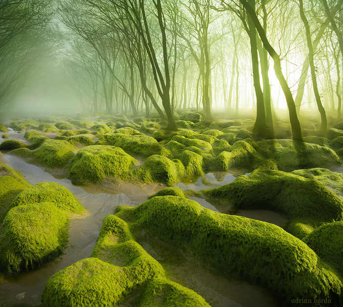 beautiful-mysterious-forests-18__880