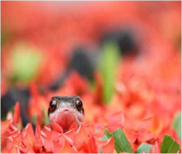 cute-snakes-29