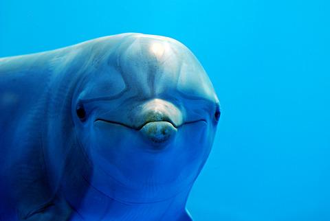イルカの画像 p1_12