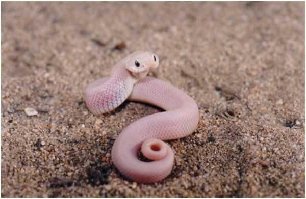 cute-snakes-7