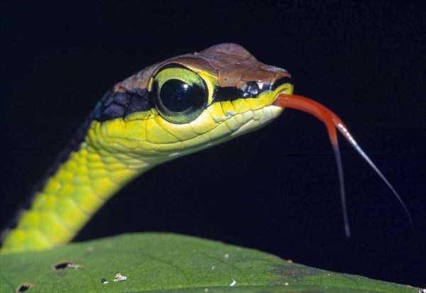 cute-snakes-20