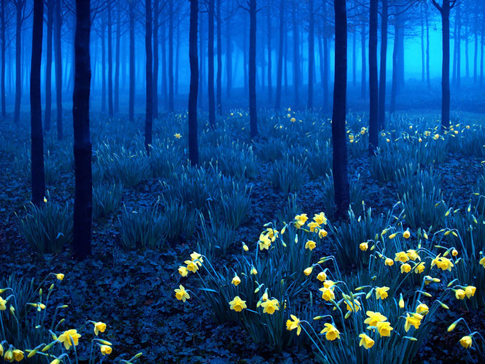 beautiful-mysterious-forests-3__880
