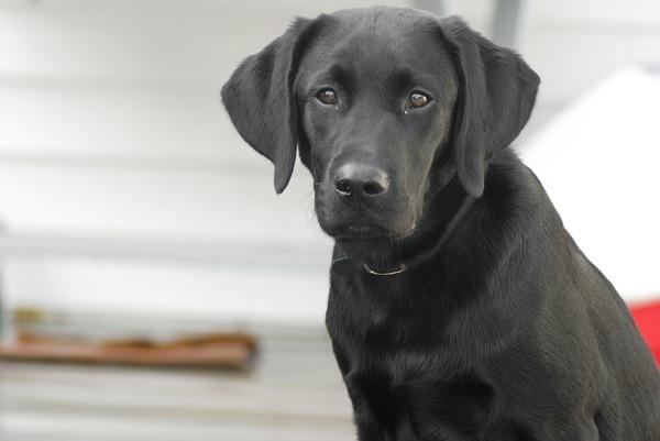 dog-862937_960_720