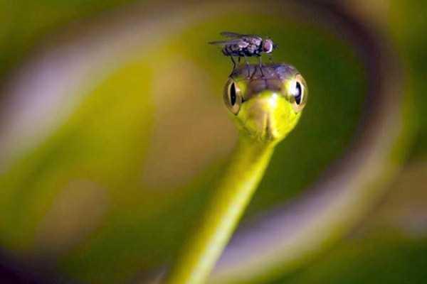 cute-snakes-18