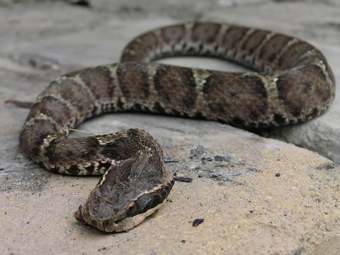 市が注意喚起も…茨城県古河市でヘビ目撃 その大きさがあり得ない!