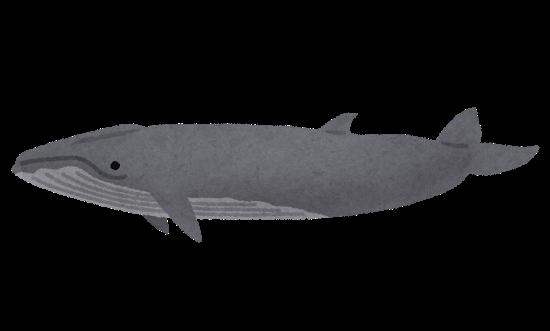 whale_08_nitarikujira